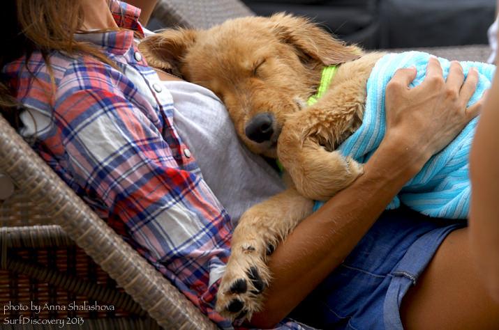 Спят усталые собаки
