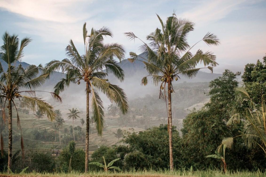 Влажный сезон на Бали